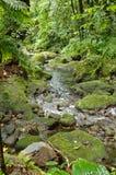 Tropikalnego lasu deszczowego strumień Fotografia Royalty Free