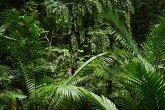 Tropikalnego lasu deszczowego tło Fotografia Stock
