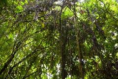 Tropikalnego lasu deszczowego tło Zdjęcia Stock