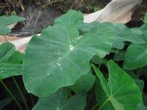 Tropikalnego lasu deszczowego ulistnienie Zdjęcie Stock