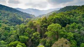 Tropikalnego lasu deszczowego widok z lotu ptaka w Tajlandia Zdjęcie Stock