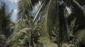 Tropikalnego lasu tropikalnego palm lata czasu Tajlandia drzewny Tajlandzki tropikalny las deszczowy plenerowy, naturalny, woda zbiory wideo