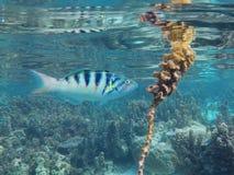 Tropikalnego rybiego łasowania morska roślina Zdjęcia Royalty Free