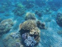 Tropikalnego seashore podwodny krajobraz Rafa koralowa w błękitne wody panoramie Obraz Stock