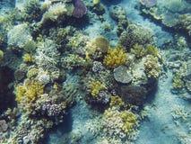Tropikalnego seashore podwodny krajobraz Rafy koralowa i ryba odgórny widok Obraz Stock