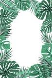 Tropikalnej dżungli monstera liścia ramy palmowy portret Fotografia Stock