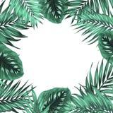 Tropikalnej dżungli monstera zieleni liści palmowa rama Zdjęcie Royalty Free