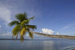 Tropikalnej raj wyspy kokosowa palma Zdjęcia Stock