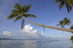 Tropikalnej raj wyspy kokosowa palma Obrazy Royalty Free