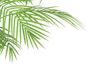 Tropikalnej rośliny branchs ilustracji