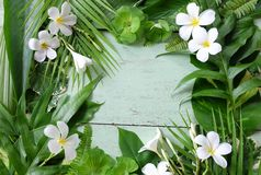 Tropikalnej rośliny liście i biały plumeria Obraz Royalty Free