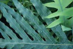 Tropikalnej rośliny zieleni ulistnienia tło zdjęcia stock