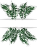 Tropikalni ciemnozieleni palma liście Miejsce dla reklamować, zawiadomienia Set Na białym tle ilustracja Obrazy Royalty Free