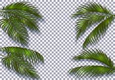 Tropikalni ciemnozieleni palmowi liście z cieniem odróżniają ich kształtem Odizolowywający na checker tle ilustracja wektor