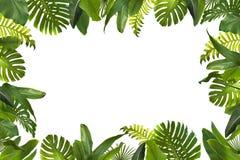 Tropikalni dżungla liście royalty ilustracja