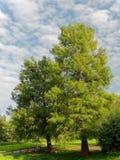 Tropikalni deciduous drzewa w parku, błękicie i nieznacznie chmurnym s, Obraz Stock