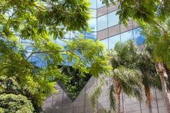 Tropikalni drzewa przeciw bardzo nowożytnemu budynkowi odbija niebieskie niebo i chmury Zdjęcia Stock