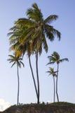 Tropikalni drzewka palmowe na plaży podczas lata zdjęcia royalty free