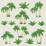 Tropikalni drzewka palmowe ustawiający royalty ilustracja
