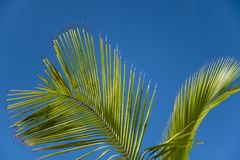 Tropikalni drzewko palmowe liście na jasnym niebieskiego nieba tle Zdjęcia Stock