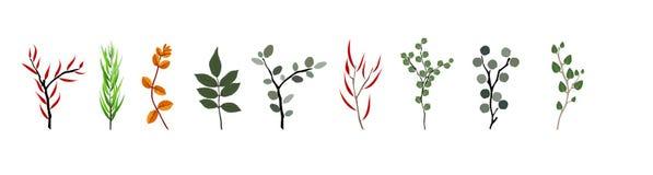 Tropikalni elementy Agonis, eukaliptus, Annona, Balata, Zamiokulkas, Cissus Zdjęcie Stock