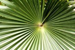 Tropikalni Fronds Obraz Stock