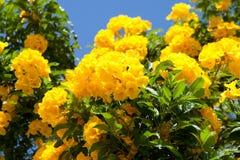 tropikalni jaskrawy kwiaty zdjęcia stock
