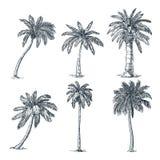 Tropikalni kokosowi drzewka palmowe ustawiający Wektorowa nakre?lenie ilustracja Wręcza patroszone tropikalne rośliny i kwieciste ilustracji
