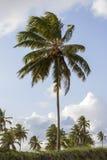 Tropikalni kokosowych palm drzewa na plażowym obszyciu morze podczas lata zdjęcia stock