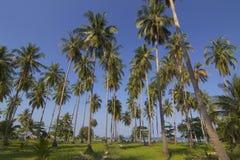 tropikalni krajobrazowi drzewka palmowe Obrazy Royalty Free