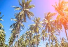 tropikalni krajobrazowi drzewka palmowe Coco drzewka palmowego wierzchołek z pomarańczowym słońce racą Obraz Royalty Free