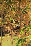 Tropikalni krzaki i trawa liście błyszczą w słońca świetle Fotografia Stock