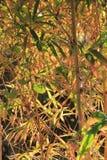 Tropikalni krzaki i trawa liście błyszczą w słońca świetle Zdjęcia Stock