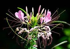 Tropikalni kwiaty Obraz Royalty Free