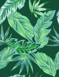 Tropikalni kwiaty, dżungla opuszczają, ptak raju kwiat royalty ilustracja