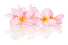 Tropikalni kwiaty na bielu z odbiciem Obrazy Royalty Free