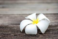 Tropikalni kwiaty na drewnie Obrazy Stock