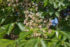 Tropikalni kwiaty od Bali wyspy Makro- fotografii obrazy royalty free