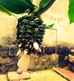 Tropikalni kwiaty tylni Zdjęcie Royalty Free