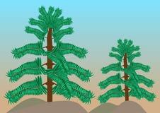 Tropikalni Lasowi drzewa Zdjęcia Stock