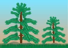 Tropikalni Lasowi drzewa Fotografia Stock