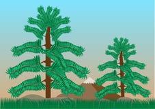 Tropikalni lasowi drzewa z niebieskim niebem Zdjęcia Stock