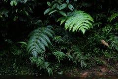 Tropikalni lasowi seansów liście paproć lub lub fotografia royalty free