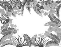 Tropikalni liście banan, koks, monstera i ogawa, różowa orchidea w czarny i biały wersji Miejsce Dla Reklamowa? ilustracja wektor