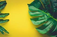 Tropikalni liście kłaść na kolorze żółtym Fotografia Stock