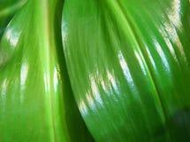 Tropikalni liście zamknięci Obrazy Stock