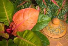 Tropikalni liście i kropli woda Fotografia Royalty Free