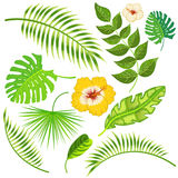 Tropikalni liście i kwiaty wektorowi Obrazy Stock