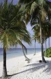 tropikalni Maldives plażowi drzewka palmowe Zdjęcia Stock
