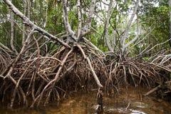 Tropikalni mangrowe bada z kajakiem Nusa Lembongan, Indonezja Zdjęcia Royalty Free